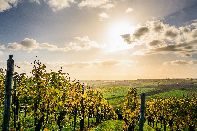 Zoete-wijnen-&-likeuren